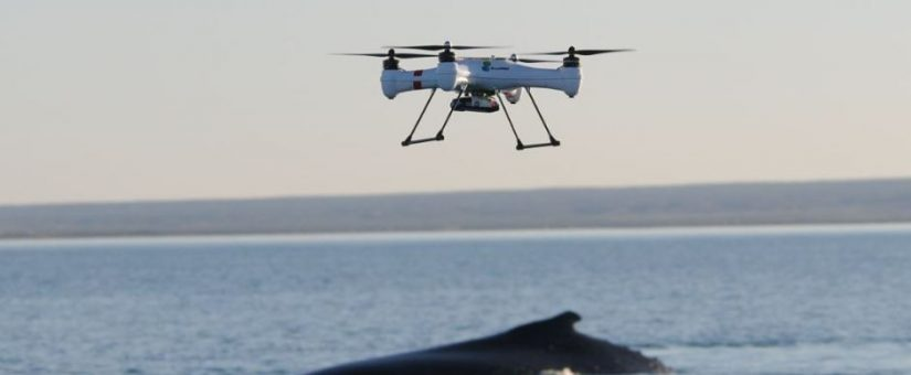 Councils Clamp Down on Drones in Public Places